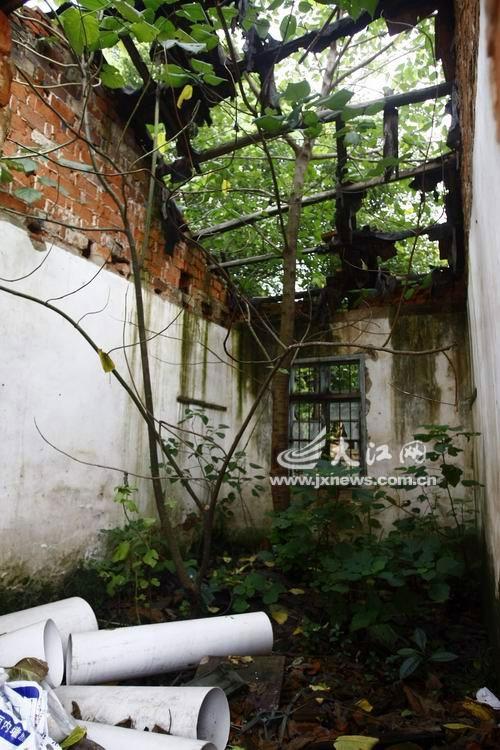 房屋门前种什么树好