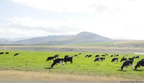 【新西兰纪行】从库克山到瓦纳卡镇沿途风光 - 华林居士 - 华林博客