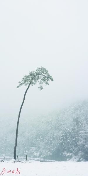 曾翰 《宋徽宗的松树之一》   摄影——绢艺术微喷2016年