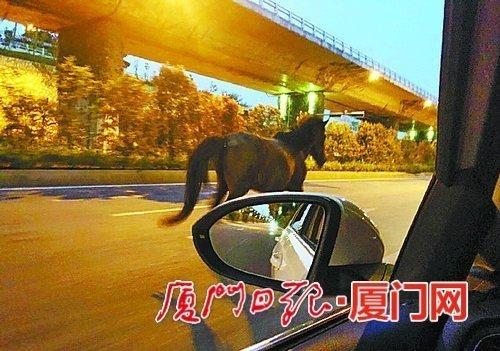 角嵩路上奔驰的马匹。