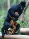 """5月13日, 黑叶猴""""笑笑""""和她的龙凤胎宝宝在一起。 新华社记者 刘大伟 摄"""