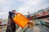 鄱阳湖结束禁渔期 渔民入湖捕捞满载而归【2】