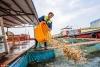 鄱阳湖结束禁渔期 渔民入湖捕捞满载而归【3】