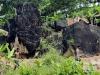 3月2日,在斯里兰卡拉特纳普勒,两名矿工走向一处宝石矿井。新华社记者刘咏秋摄
